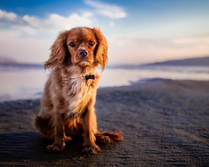 Podstawowe cechy dobrej karmy dla psa