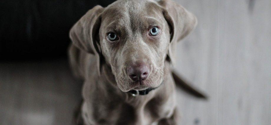 Karmy dla psa - podstawowe rodzaje
